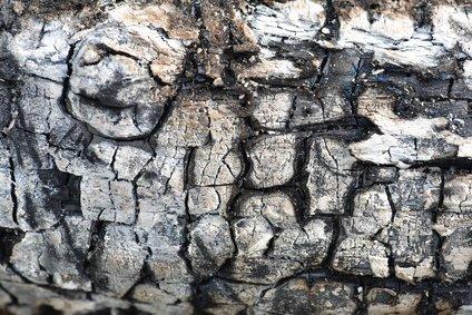 Black coal burnt tree macro front view sichetti for Ardeco pellet